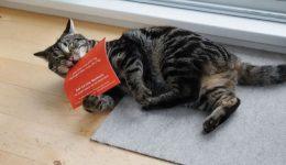 Catnip letter with cat