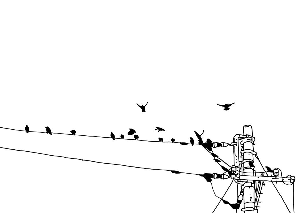 Synergy Birds